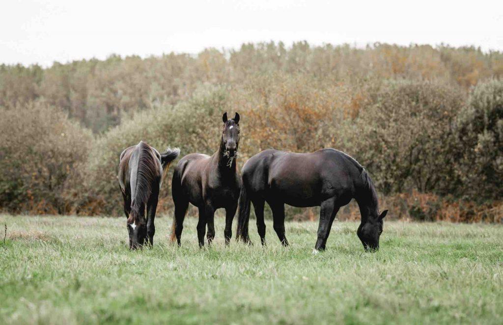 Artgerecht Pferdehaltung auf herrlichen Weiden