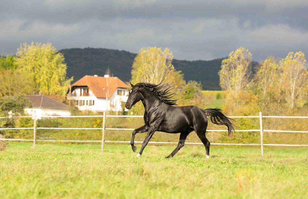 Glückliche Pferde in traumhafter Umgebung